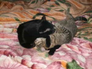 true love - My oldest cat and my youngest cat having a moment of togetherness.