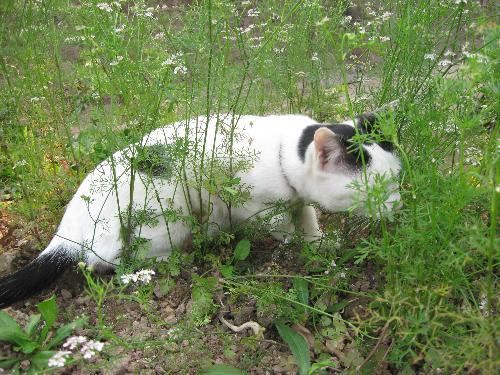 my Sujin 7 - in my parent's garden