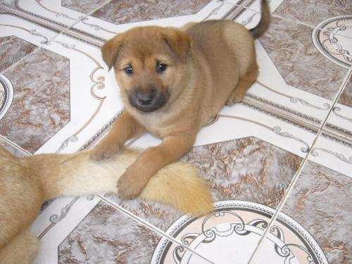 my dog 3 - when they are 2 months old