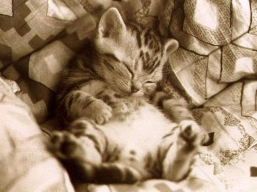 Sleeping Cats - Cats sleeping together.