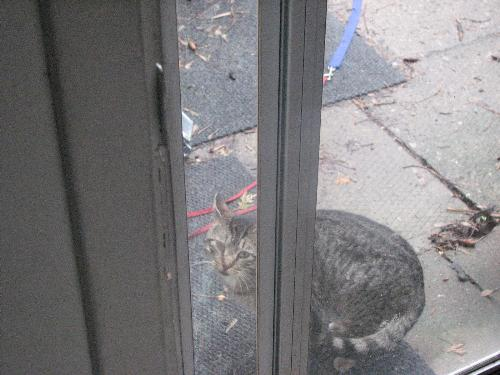 Kitty at the door - This is the kitty at the door when my cat was there. My cat was hissing at her, but she's unknown to him and that's why he's doing that.