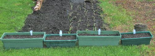 Containers - Spinach and lettuce planted in these.