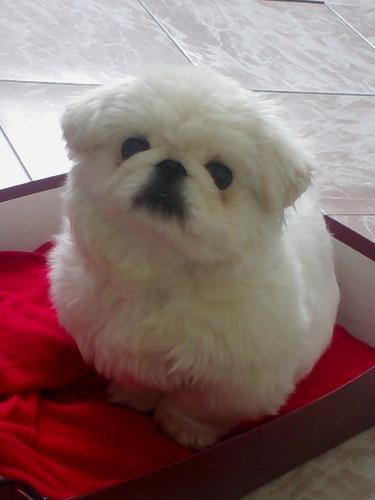 KeKe - Cute little dog