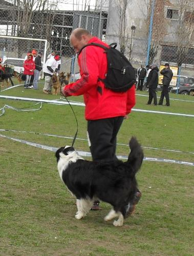 Border Collie - Waiting to enter the show ring at CAC Brasov 2011