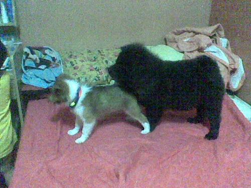 my dog  - everette and yuro