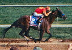 Real Quiet - Real Quiet won the 1998 Kentucky Derby and Preakness stakes.