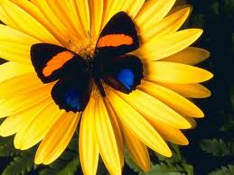 yellow flower - it is a yellow flower with a butterfly