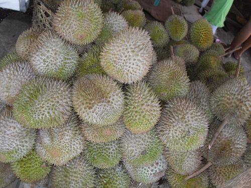 Durian World - The Durian, most commonly found in Davao City, Philippines is said to have the smell like hell, but tastes like heaven.