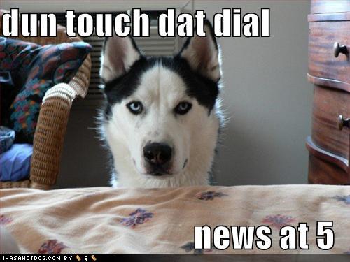 Funny Dog Image - A funny news report parody image.