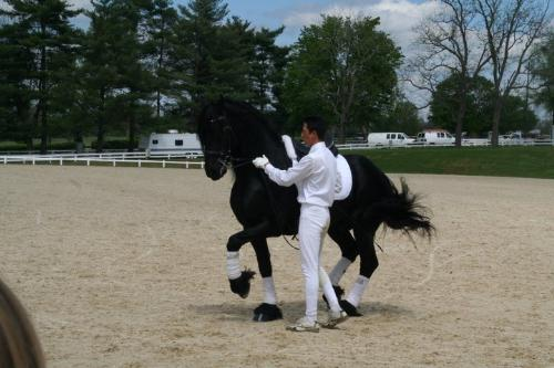 In hand - This Fresian is doing dressage without his rider. He is getting commands from the person holding him.