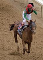 Wild Kingdom - Wild Kingdom won the 137th Kentucky Derby last saturday!