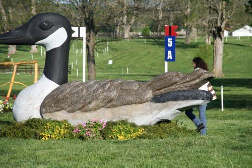 That is a big goose! - This Canadian goose is really a jump at a cross country event!