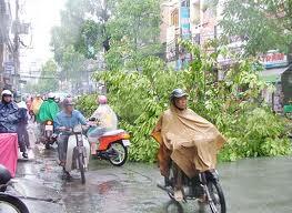 Heavy rain, broken trees - Trees were broken because heavy rain