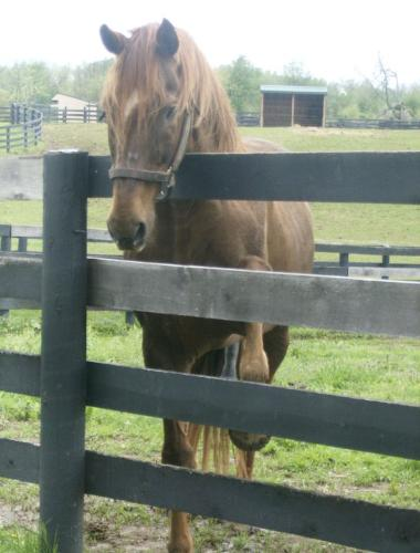 Creator - Creator lives at Old Freind in Kentucky for retired race horses. He was getting impatient for some carrots in this photo!