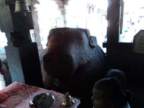 increasing nandi - this is increasing nandi in temple near jurnool, andhra pradesh.