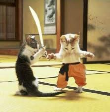 MEoorrrrr! MEOORRR!!!! groalll!!!!! HAiii!! - the mylot cat fight showdown!