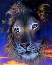 lion - its king of jungal