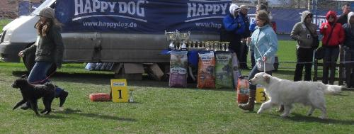 Junior handler - In the show ring at CAC Brasov 2011
