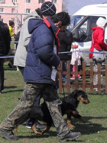 Jagd Terriers - Waiting to enter the show ring at CAC Brasov 2011
