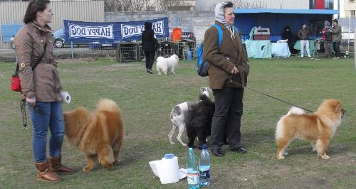Whippet and Chow Chow - Waiting to enter the show ring at CAC Brasov 2011
