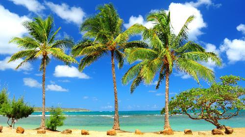 Palms - Anahola Palms, Kauai, Hawaii.