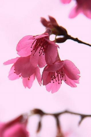 flower  - photo resolution: 318*479