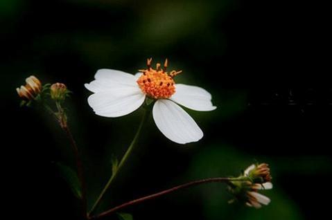 flower - photo resolution: 479*318