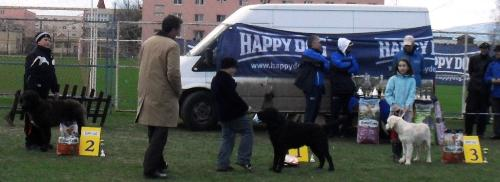 dog show winners - In the show ring at CAC Brasov 2011