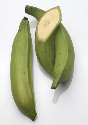 Plantain!  - A picture of a plantain.