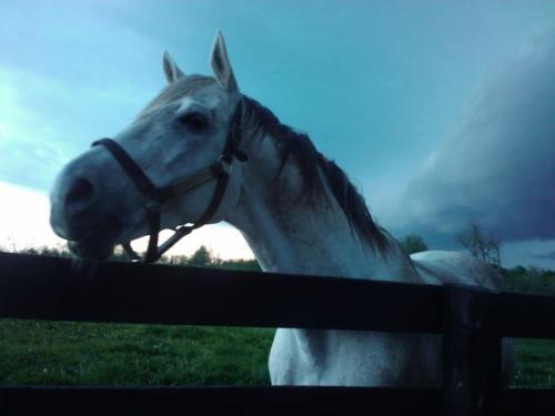Bully - Bully is his nick name! He given name is Bull inthe Heather! He lives at Old friends equine never lexington,Kentucky,