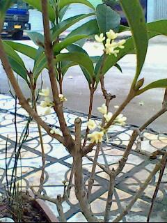 flower - photo resolution:240*320