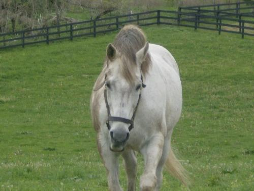 Bull in the Heather - Bully,as he is known,is a son of Ferdinand. Bully lives in Lexington Kentucky at Old Friends Retirement farm for retired racehorses!