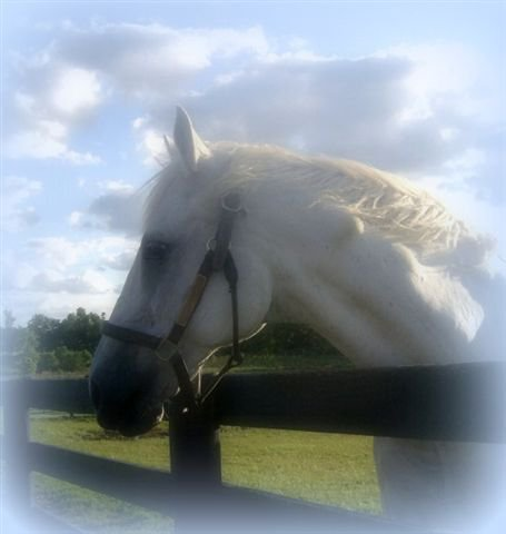 Black Tie Affair - He was such a beautiful horse!