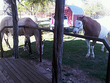 Waiting for the farrier. - These two horses are the ones waiting for the farrier.