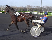 Sulky racing - Most harness racing horses are Standerdbreds.