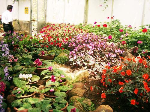 haggala flowers - Haggala Botanical garden in Sri Lanka