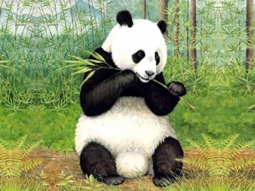 China panda  - i come from china chengdu,the hometown of panda...