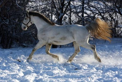 Gorgeous! - This is Greyheart having fun in the snow!