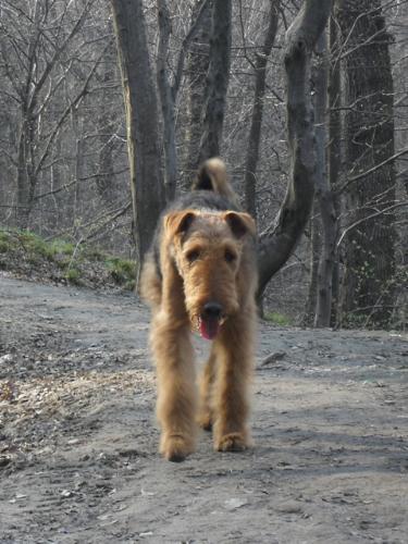 I'm coming! - Binne during a hike on Capela