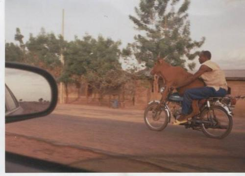 Double Ride ! - Man transporting his pet ...