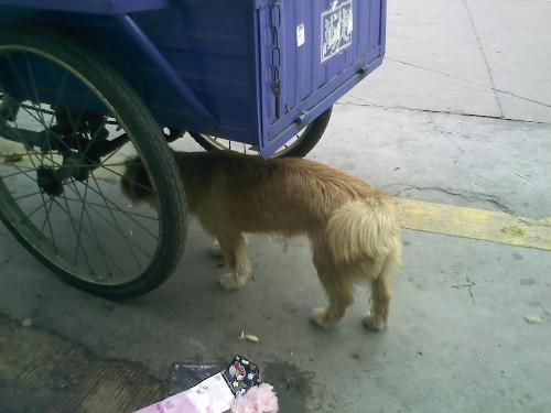 In looking for food dog - May 15,pat in shenzhen.A stray dog in the street,looking for food.