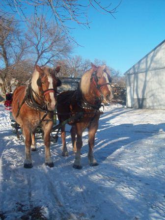 Sleigh rides - My friends farm for a sleigh ride.