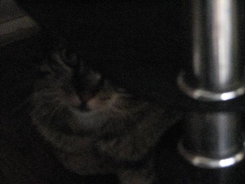 What a cutie - When I found her under the table, I had to get pictures.  Grainy, but it's still cute.