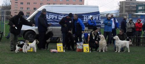 Dog show winners - at CAC Brasov 2011