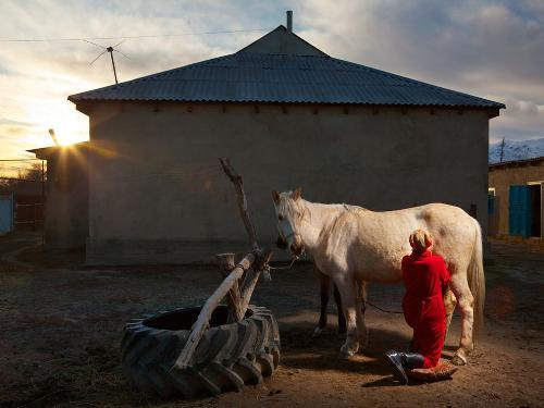 Horse being milked - Here a woman in Katzakhstan is milking the horse. In some countries this is normal!