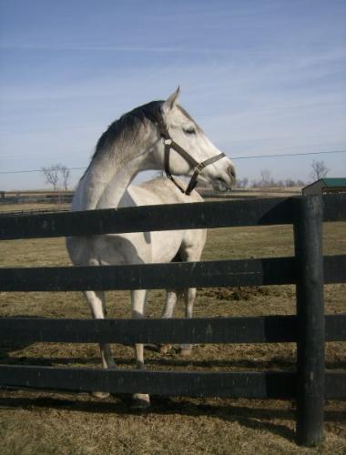 Bully - Bull inthe Heather. TB stallion who lives at Old Friends retirement home for racehorses in Lexington,Kentucky.