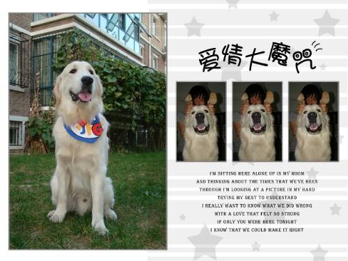 NIco - It is a handsome boy,isn't it?