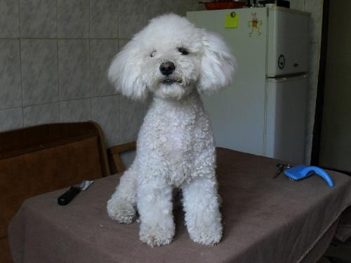 After the last grooming session - she looks tidy now, but after two weeks she will look dirty and ugly again...