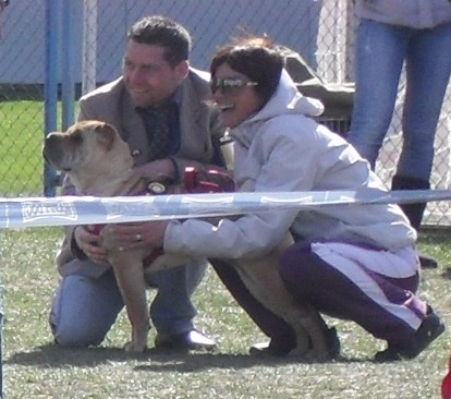 Shar Pei - Waiting to enter the show ring at CAC Brasov 2011