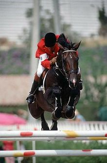 Beligum Warmblood - One of the many breeds of Warmbloods.